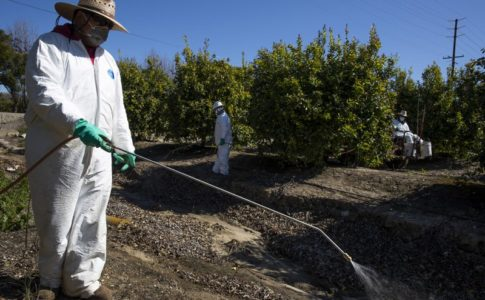 An agriculture worker sprays pesticide on a farm.
